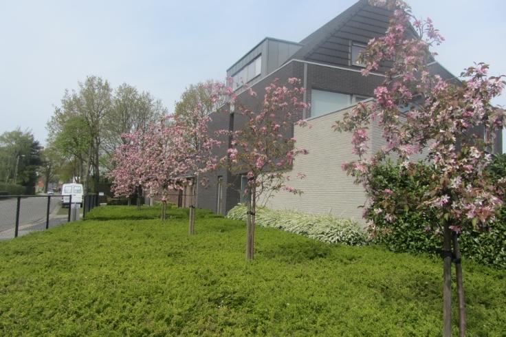 Duplex de 3façades à louerà Kasterlee auprix de 725€ - (6198337)
