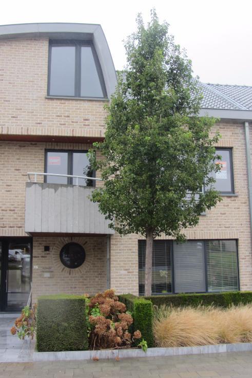 Duplex van 2gevels te huurte Onkerzele voor765 € -(6641225)